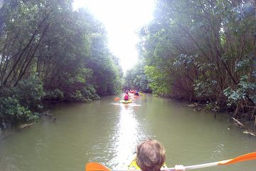 Mangrove martinique kayak 2